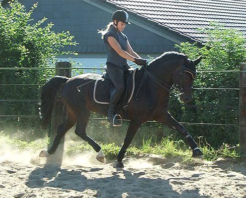 New Forest Pony Ahornhof